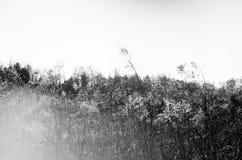 发光的草 库存照片