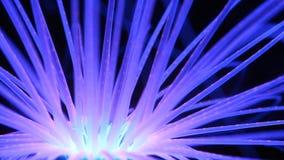 发光的蓝色珊瑚礁 库存图片