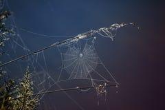 发光的蜘蛛网 库存图片