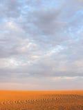 发光的被耕种的被仿造的领域在桃红色和蓝天下 免版税库存照片