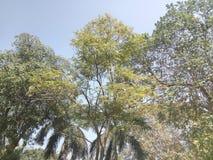 发光的结构树 免版税库存图片