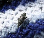 发光的黑甲虫 库存图片