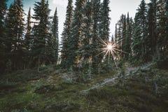 发光通过一个红木树森林的太阳在登上Revelstoke国家公园 空中不列颠哥伦比亚省街市温哥华视图 库存图片