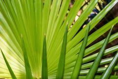 发光通过一片热带绿色叶子的太阳 自然本底,纹理 库存照片