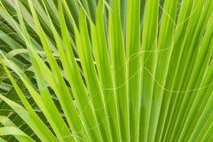 发光通过一片热带绿色叶子的太阳 自然本底,纹理 免版税库存图片