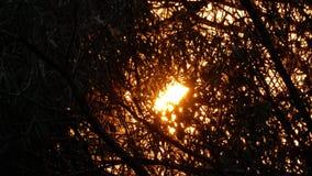 发光通过分支树的太阳 股票视频
