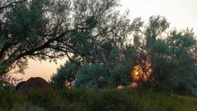 发光通过分支树的太阳 股票录像