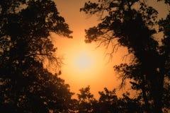 发光通过在大雾的树的清早太阳 免版税库存图片