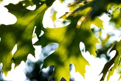 发光通过明亮地色的叶子的抽象阳光 免版税库存照片