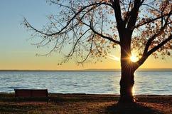 发光通过树的太阳在秋天末期 免版税库存照片