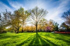 发光通过树的太阳在舍伍德庭院在Balti停放, 免版税库存图片