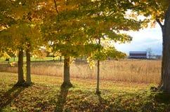 发光通过树的阳光在秋天晚上 免版税库存照片