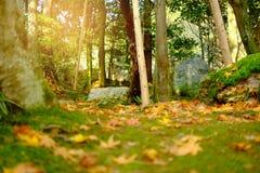 发光通过树的阳光在秋天 图库摄影