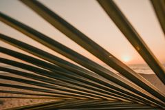 发光通过棕榈树叶子的太阳  免版税库存照片