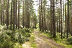 发光通过森林的太阳 图库摄影