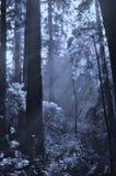 发光通过森林的阳光 免版税库存照片