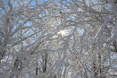 发光通过积雪的分支的太阳 免版税库存照片