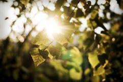 发光通过金黄机盖的温暖的秋天太阳 免版税库存图片