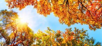 发光通过金黄树梢的秋天太阳 免版税库存图片