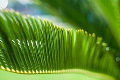 发光通过绿色棕榈事假的太阳 浅深度的域 库存图片