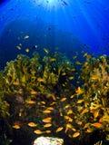 发出光线礁石 库存图片