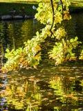 发出微光的秋天 库存照片