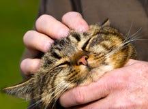 发出愉快的声音的小猫 库存图片