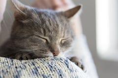 发出愉快的声音的猫 库存照片