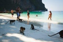 发埃发埃islandsi,泰国, 12月09,2013 :在猴子的猴子 免版税库存照片