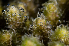 发布氧气的海藻 免版税库存照片