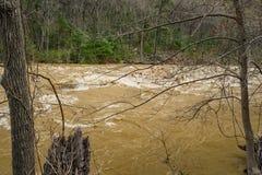 发怒的急流的特写镜头视图在Maury河的 免版税库存照片