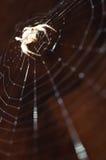 发怒蜘蛛 库存照片
