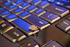 发恶臭在键盘的臭虫 免版税库存照片