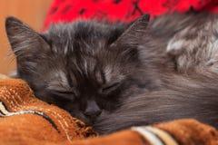 发烟性猫作梦 库存照片