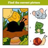 发现正确图片 一点蜗牛和背景 免版税库存图片