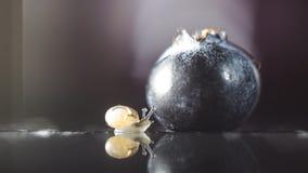 发现蓝莓的蜗牛 库存照片