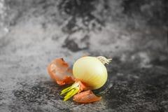 发芽从电灯泡的大葱在选择聚焦在灰色背景 大葱小的叶子  免版税库存图片