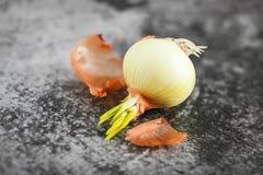 发芽从电灯泡的大葱在选择聚焦在灰色背景 大葱小的叶子  免版税图库摄影