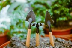 发芽在单独地面,在庭院辅助部件附近 免版税库存照片