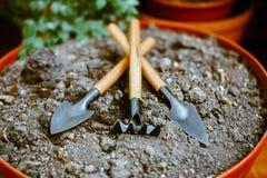发芽在单独地面,在庭院辅助部件附近 免版税库存图片