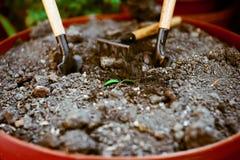 发芽在单独地面,在庭院辅助部件附近 库存图片