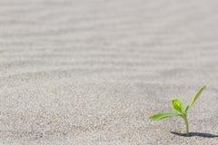 发芽在沙漠的植物 在的新芽 库存照片