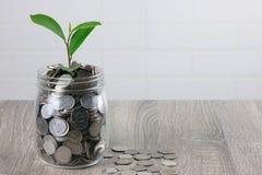 发芽在硬币的植物 免版税库存图片