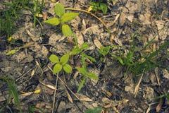 发芽树在春天森林里 库存照片
