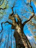 发芽树 库存图片