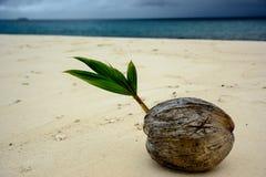 发芽椰子 免版税库存照片