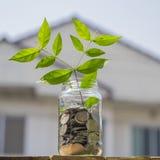 发芽生长从在玻璃瓶子的硬币反对迷离房子backge 免版税库存图片