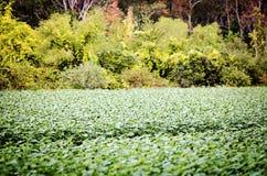 发芽的向日葵在秋天 免版税库存照片