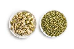 发芽的和干绿豆 库存图片