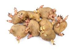 发芽的土豆隔绝了 免版税库存照片